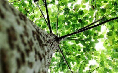 Se certifica por primera vez en América la generación de energía renovable y sostenible de origen forestal